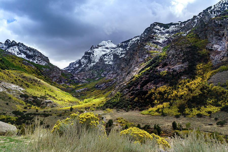 Lamoille Canyon in Fall by Janis Knight