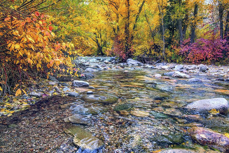 Lamoille Creek in Fall 2329 by Janis Knight