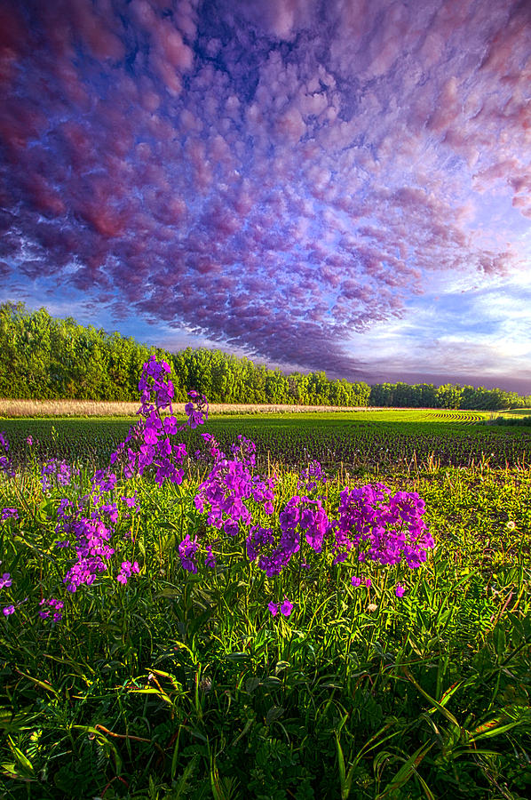 Country Life Photograph - Lamore De Ma Vie by Phil Koch