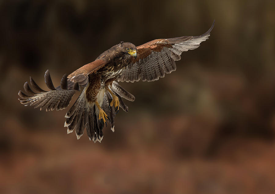 Landing Approach by Bruce Bonnett