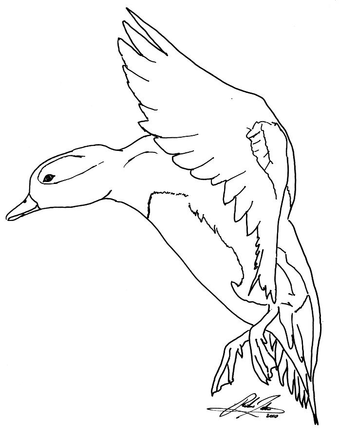 Landing Duck Outline Drawing by Richie Tatum