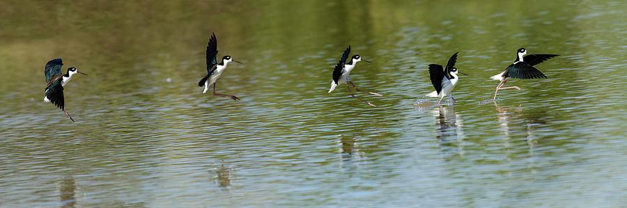 Bird Photograph - Landing by Emily Bristor