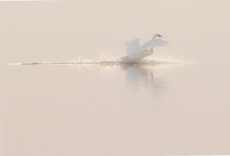 Landing Gracefully by Allen Ahner
