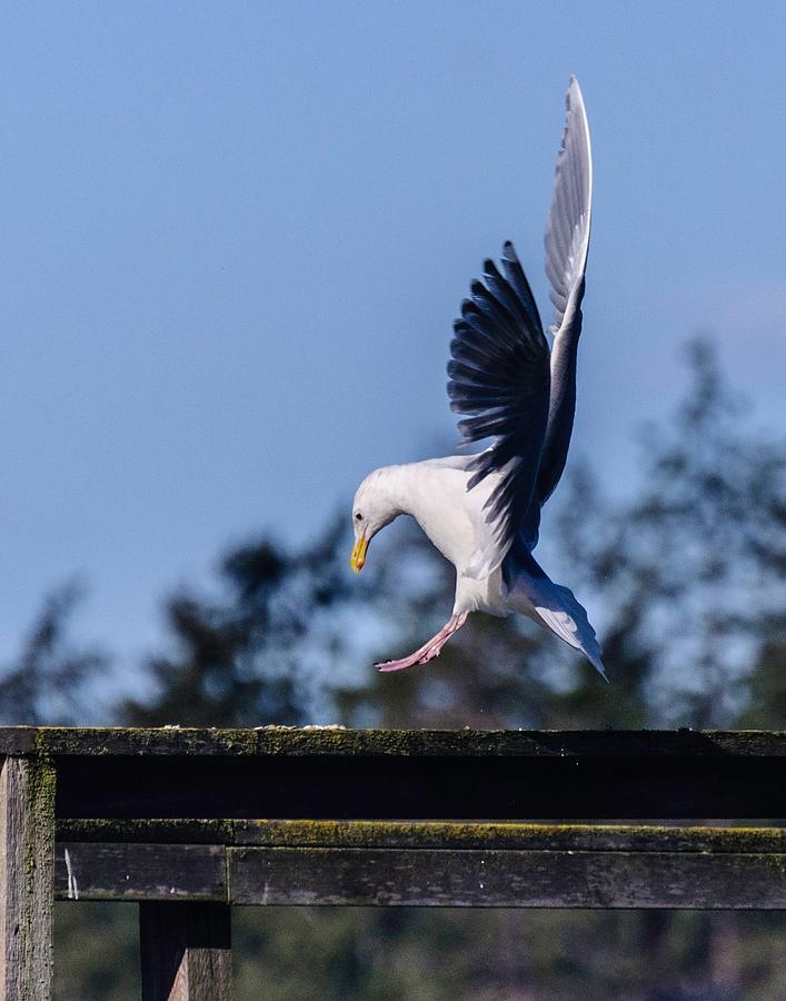 Landing by Ken Foster