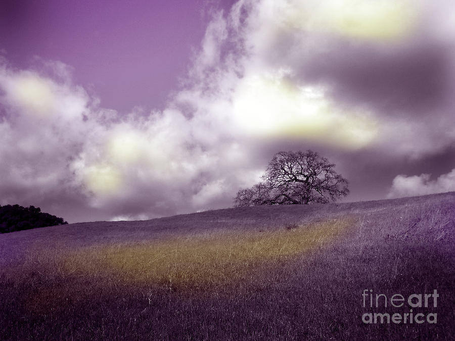 Arastradero Photograph - Landscape In Purple And Gold by Laura Iverson