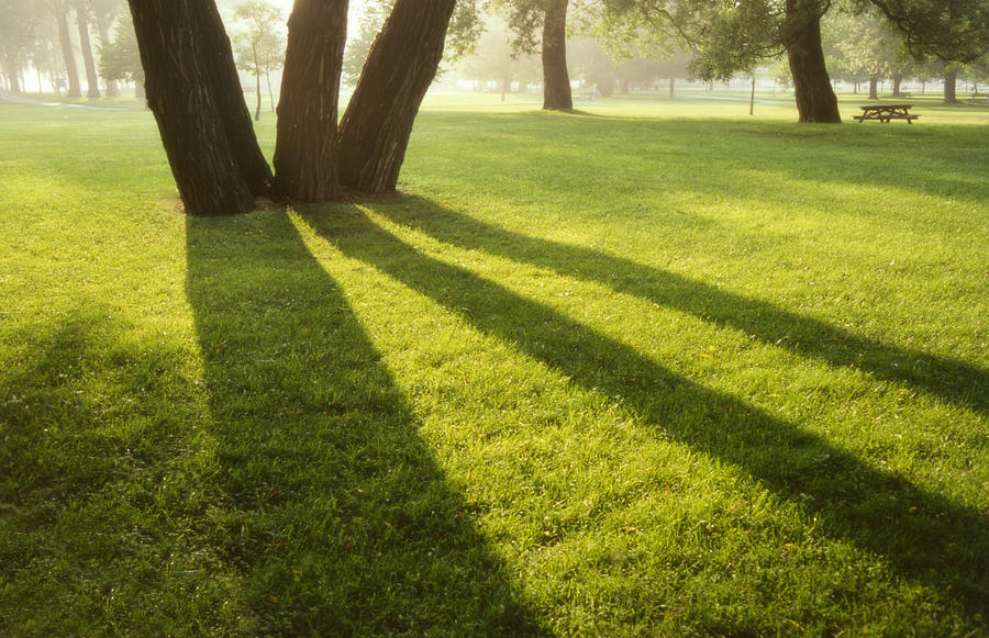 119 - Landscape - Morning Tree Shadows Photograph by Eric Copeman