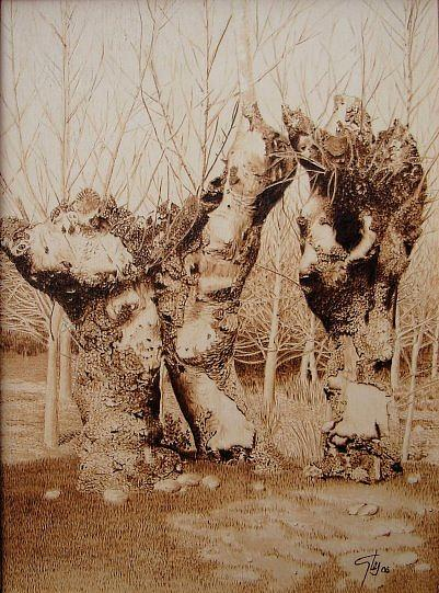 Landscape Pyrography - Landscape Of Galapagos In Spain by Juan Carlos Gonzalez