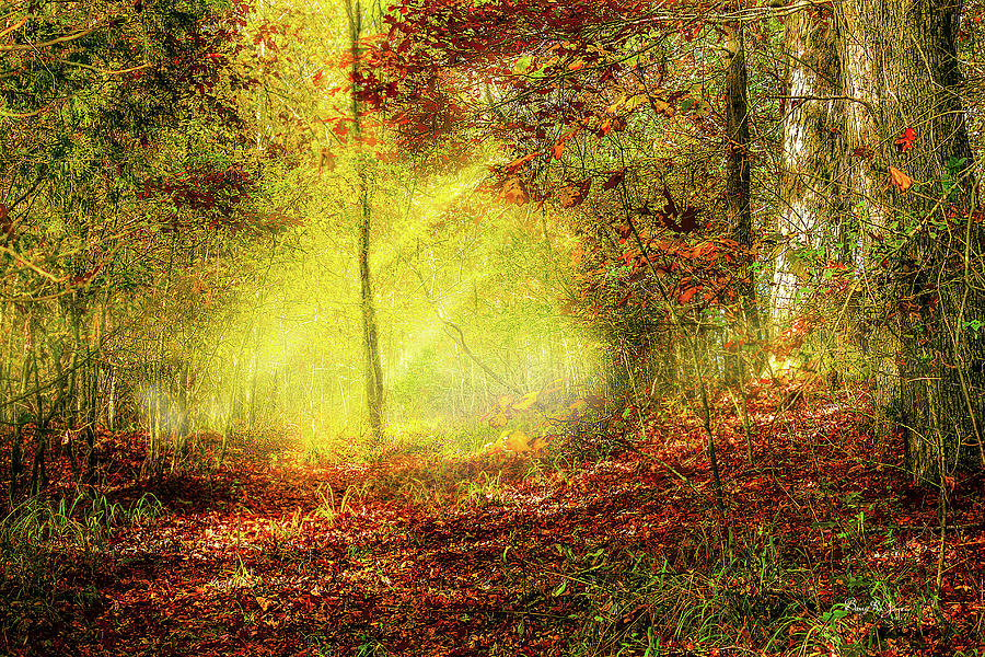Trail Photograph - Landscape - Sunbeams - Woodland Trail by Barry Jones