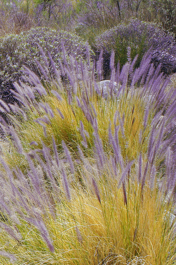 Landscape Photograph - Landscape With Purple Grasses by Ben and Raisa Gertsberg