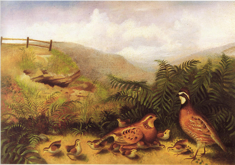 Birds Painting - Landscape With Quail Cock Hen And Chickens by MotionAge Designs