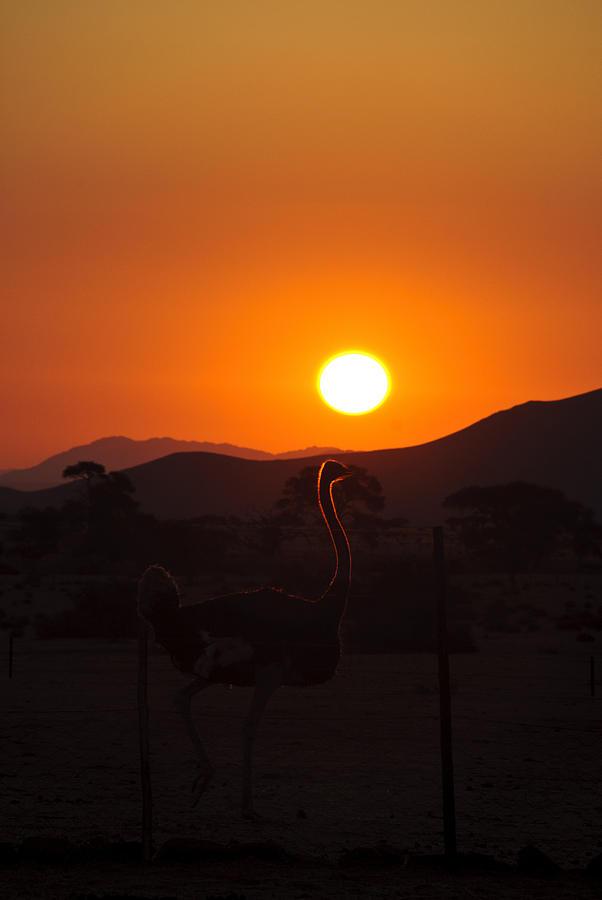 Ostrich Photograph - Landscapes - Ostrich Sundown by Andy-Kim Moeller