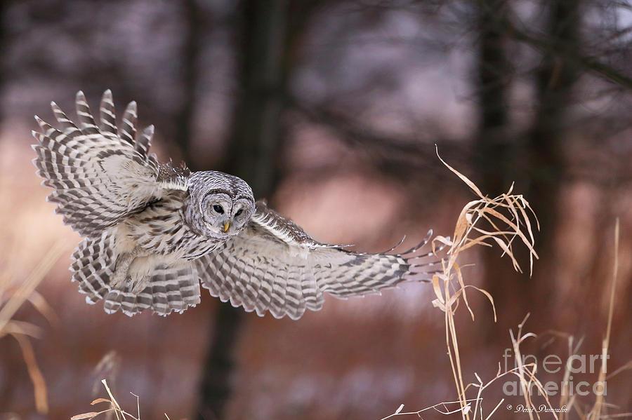 Bird Photograph - Lange De La Mort by Denis Dumoulin