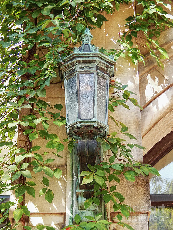 University Of Michigan Photograph - Lantern Light With Ivy by Phil Perkins