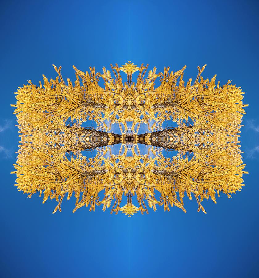 Larch Kaleidoscope 2 Photograph by Pelo Blanco Photo