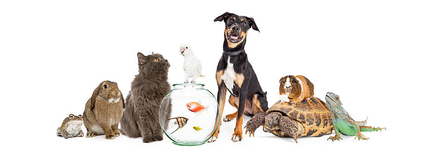 Large Group Of Pet Animals Together Photograph