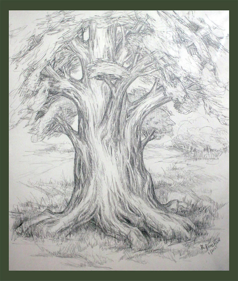 Tree Drawing - Large Shady Tree by Ruth Renshaw