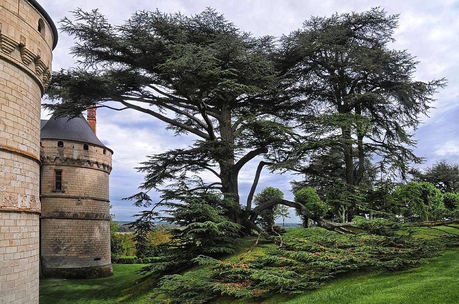 Chateau De Chaumont Photograph - Large Trees At Chateau De Chaumont by Dave Mills