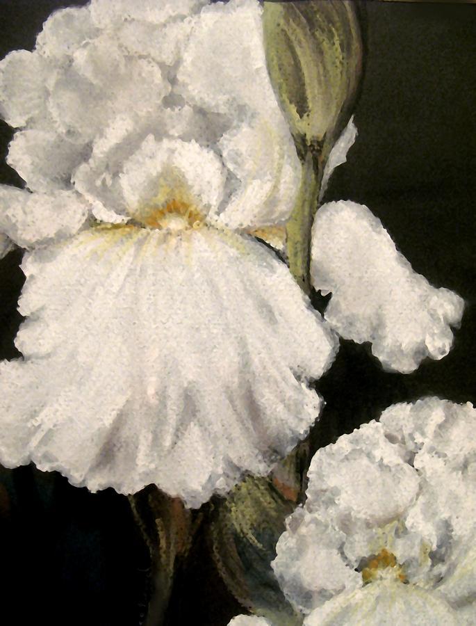 Pastel Painting - Large White Iris by Carol Sweetwood