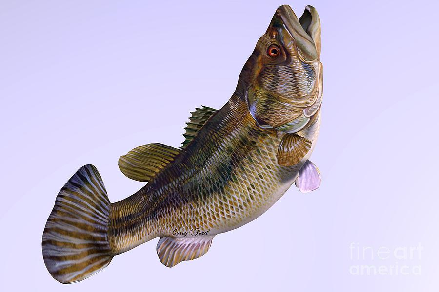 Largemouth Bass Painting - Largemouth Bass Side Profile by Corey Ford