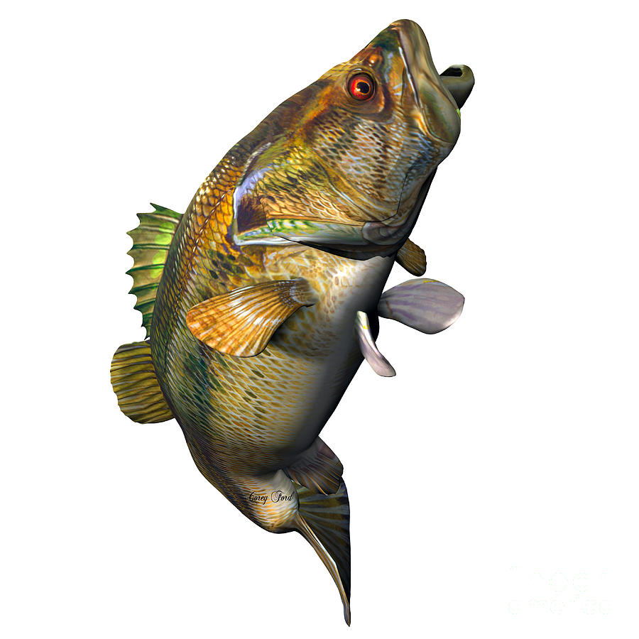 How to tell a male largemouth bass