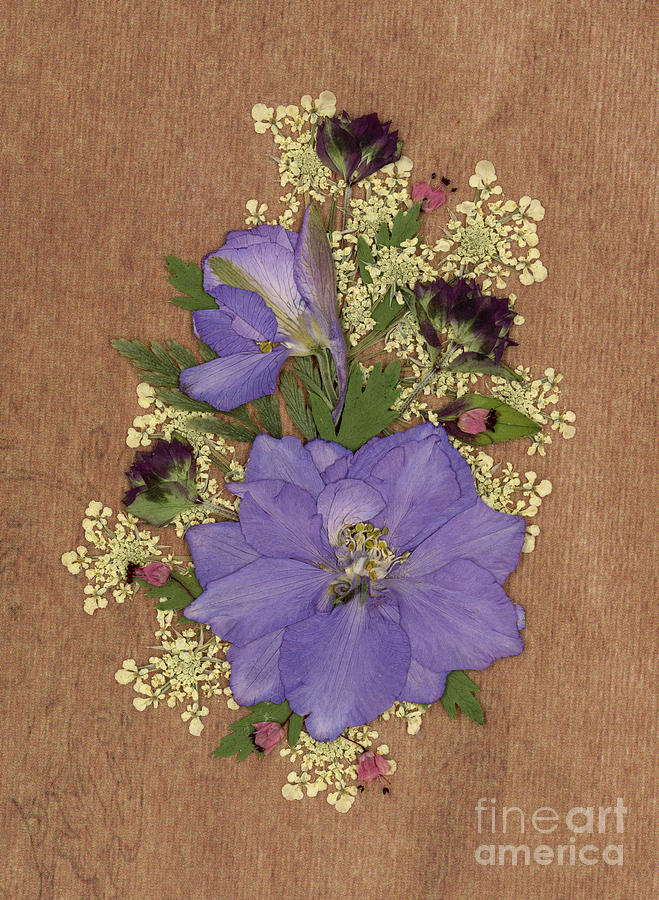 Larkspur and Queen-Ann's-Lace Pressed Flower Arrangement by Em Witherspoon