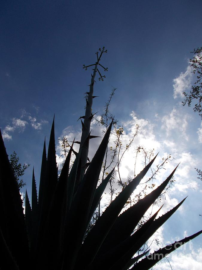 Agave Photograph - Last Act by Jerry Bokowski
