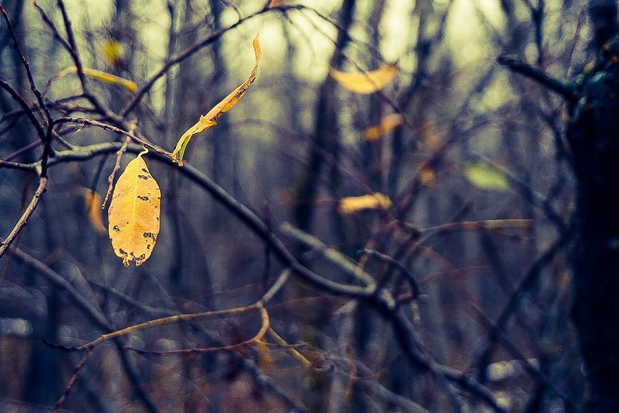 Last Bit Of Fall Photograph by Desmond Raymond
