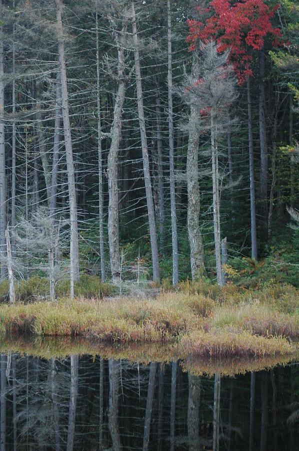 Adirondacks Photograph - Last Color by William A Lopez
