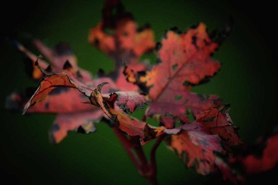 Leaves Photograph - Last Dance by Gaby Swanson