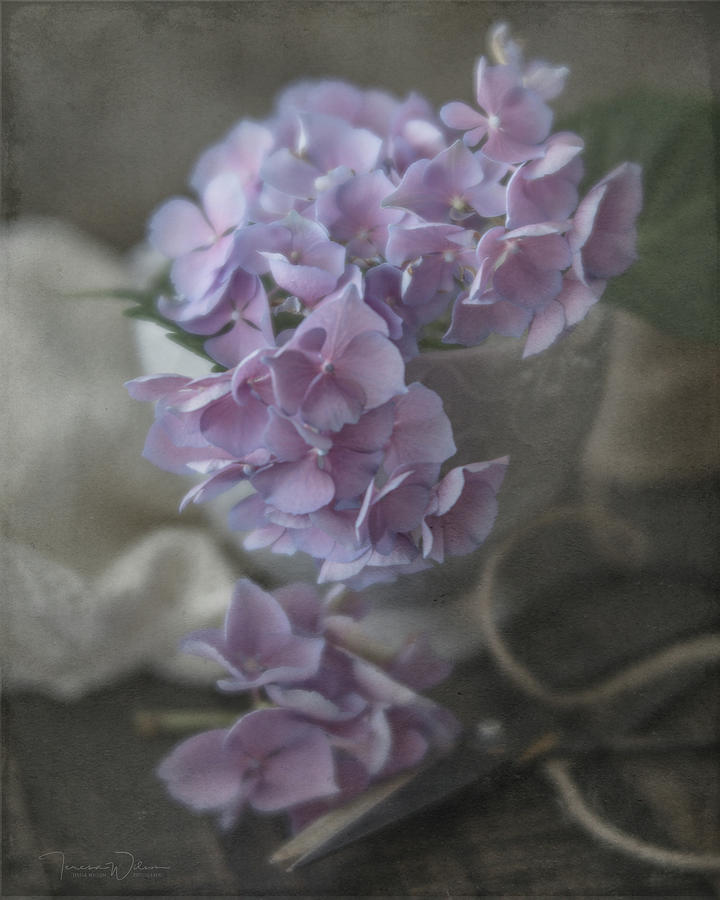 Last Hydrangeas Of The Season Photograph