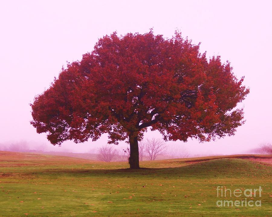 Tree Photograph - Last Leaf To Fall by Dennis Curry