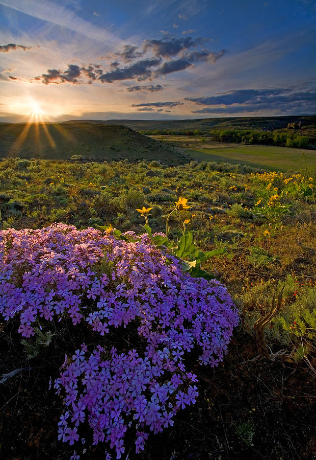 Wildflowers Photograph - Last Light Of Spring by Mike  Dawson
