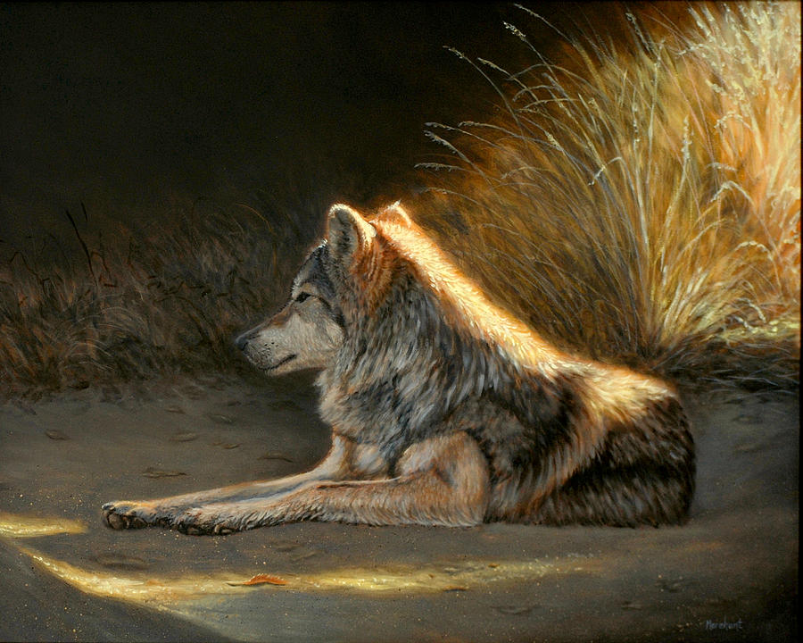 Oil Painting - Last Light - Wolf by Linda Merchant