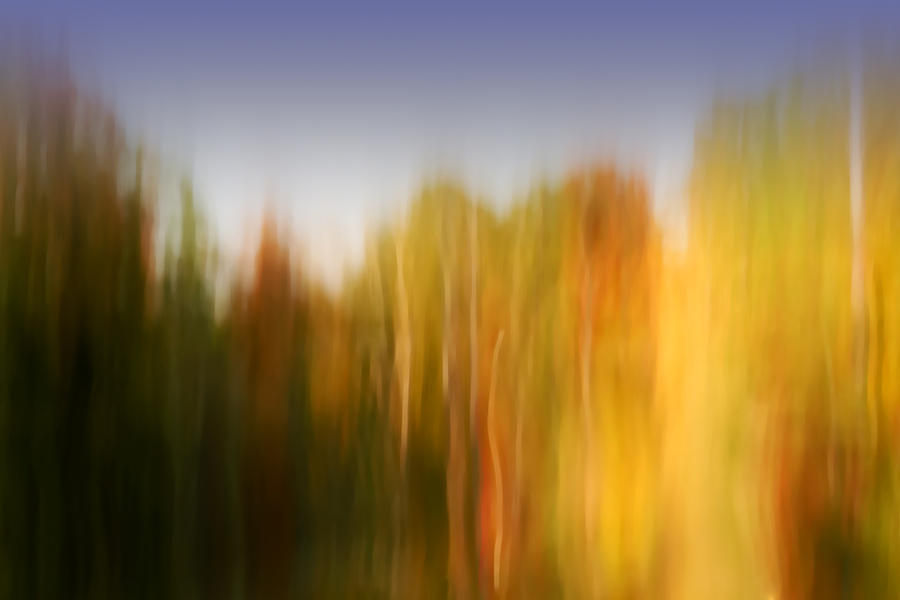 Abstract Photograph - Last November At Duke by Margaret Denny