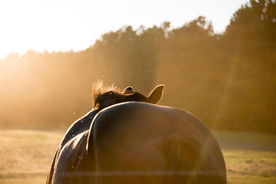Horse Photograph - Last Rays by Jodi Lynne Belinski
