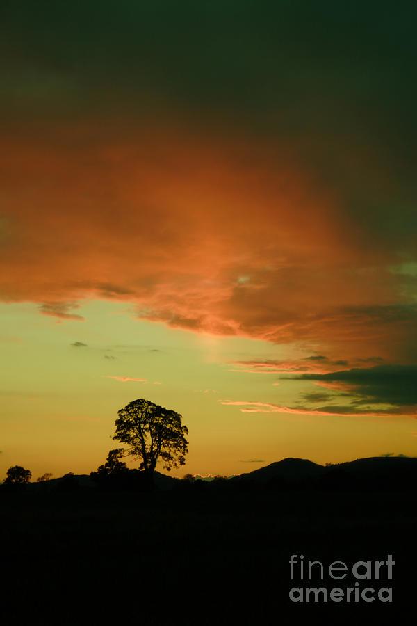 Tree Photograph - Last Rays Of Light by Angel  Tarantella