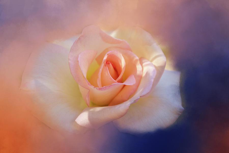 Flower Digital Art - Last Rose Of Summer? by Terry Davis