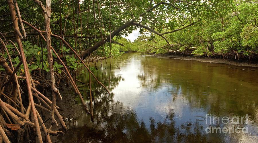 Swamp Photograph - Last Shot Before The Rain by Matt Tilghman