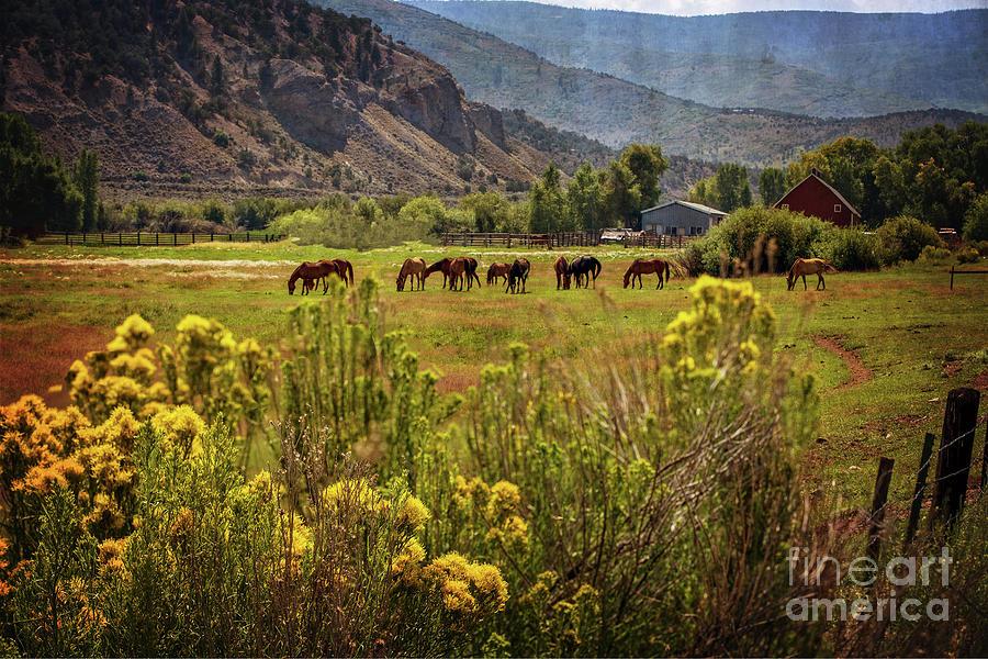 Last Summer Grass by Franz Zarda