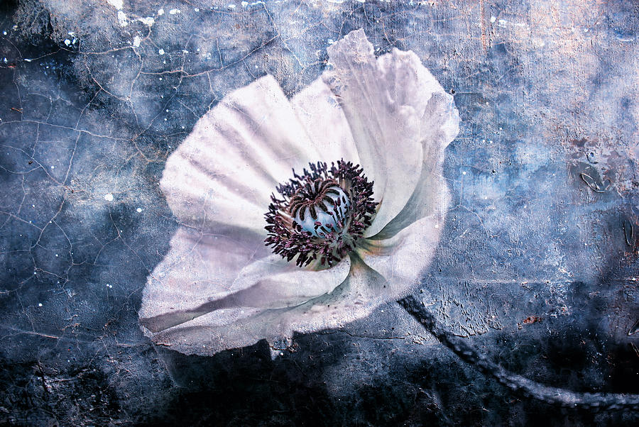 Flower Photograph - Last Summers Dream by Joachim G Pinkawa