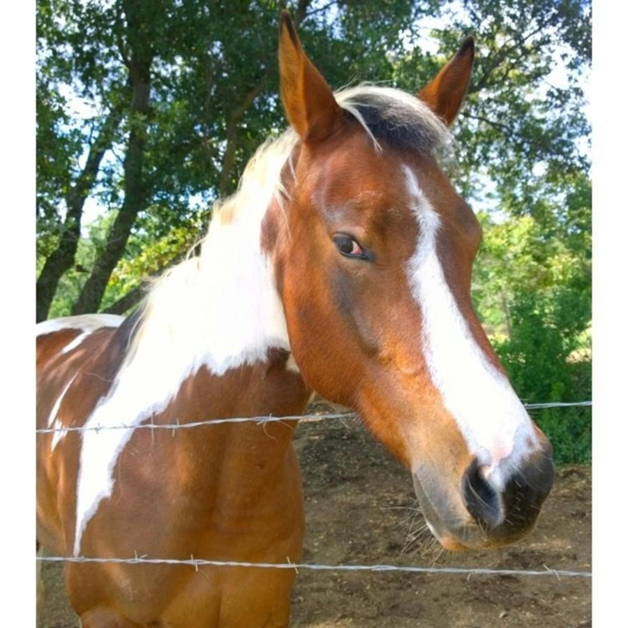 Horse Photograph - Last Week, I Met My First #horse! She by Shari Warren