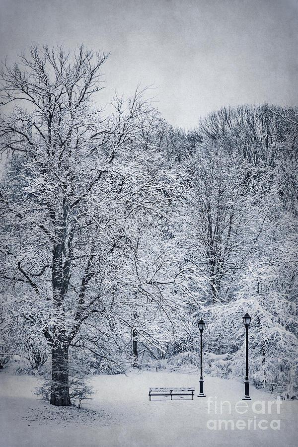 Last Winters Dream Photograph
