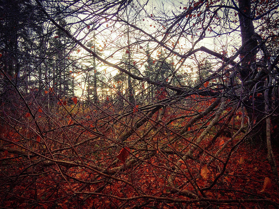 Woodland Photograph - Late Autumn Morning by Andy Walsh