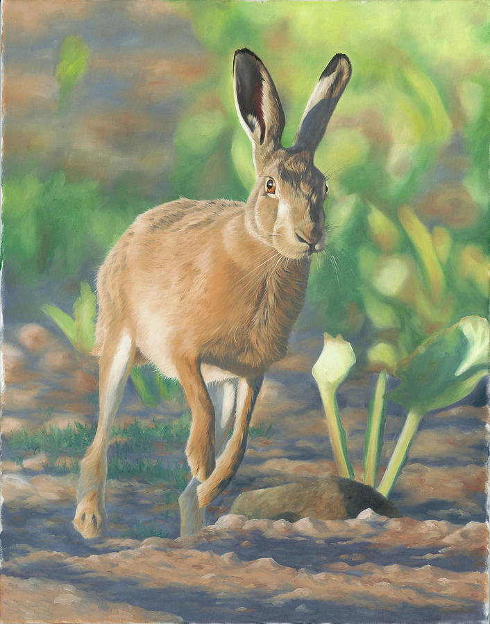 Brown Hare Painting - Late Light-hare by Clive Meredith