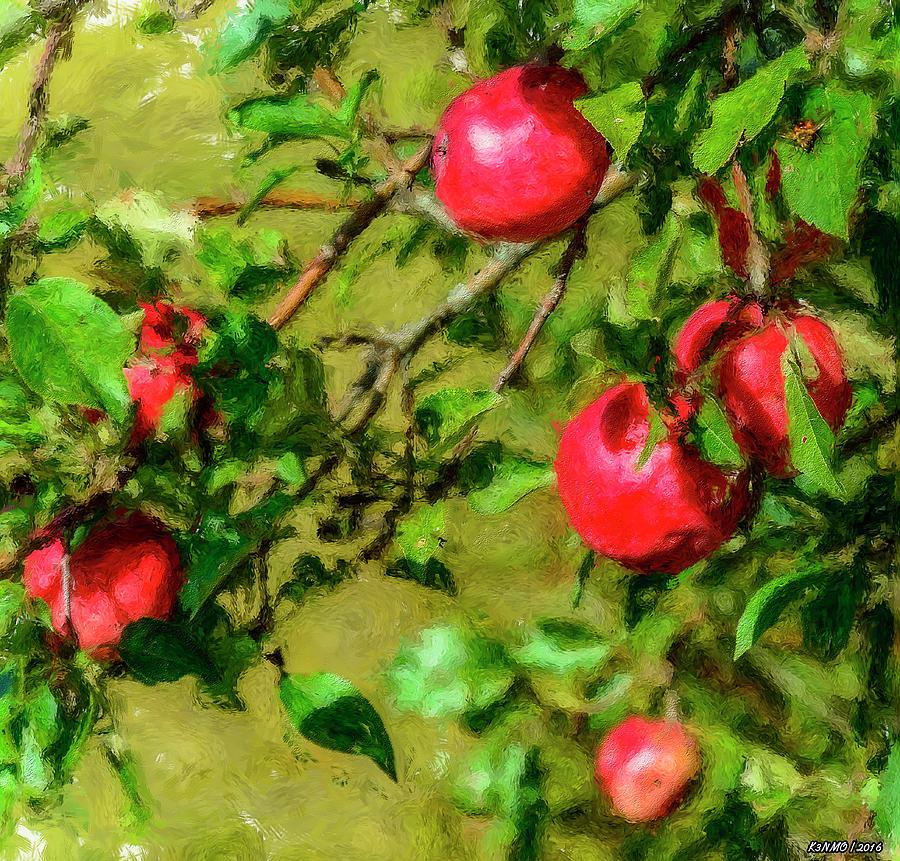 Apple Photograph - Late Summer Apples by Ken Morris