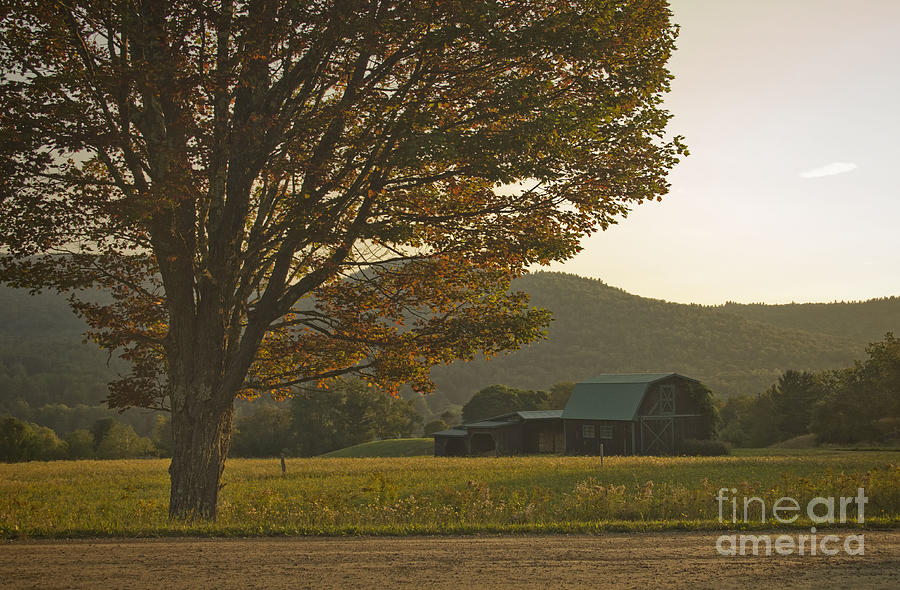 Summer Photograph - Late Summer Color by Diana Nault