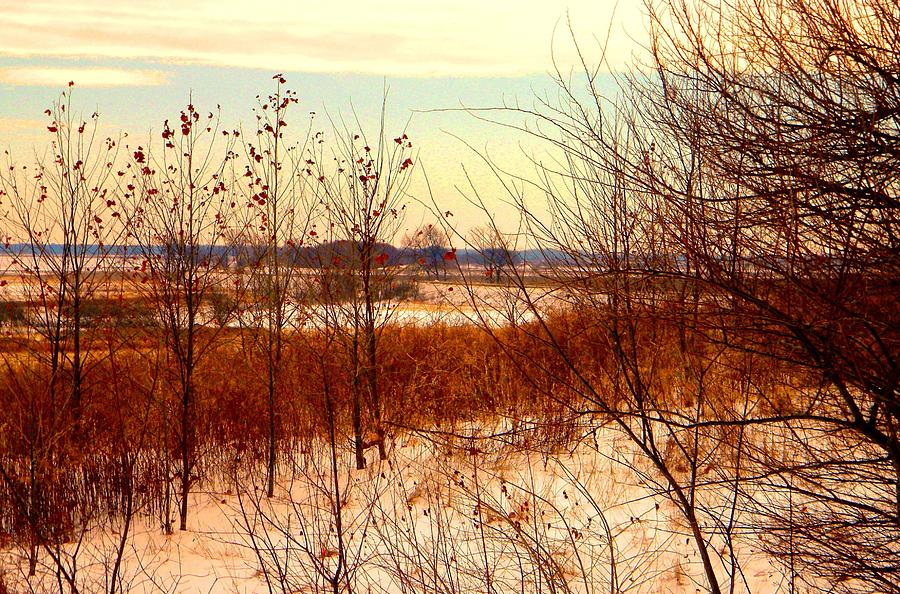 Winter Photograph - Late Winter at Emiquon by Helen ONeal