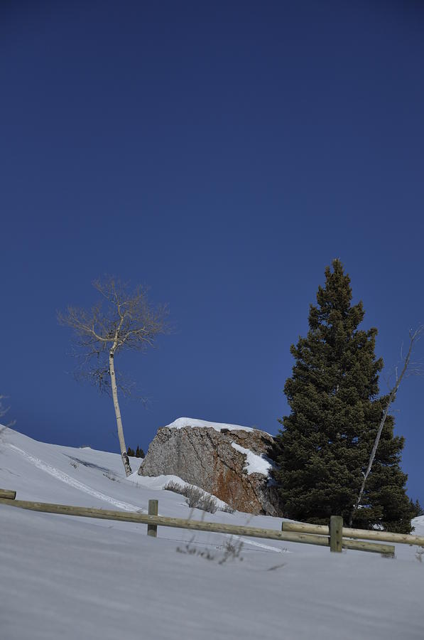 Tree Photograph - Late Winter Day by Frank Madia