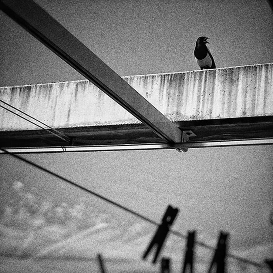 Madrid Photograph - Laundry Bird  #bird #animal by Rafa Rivas