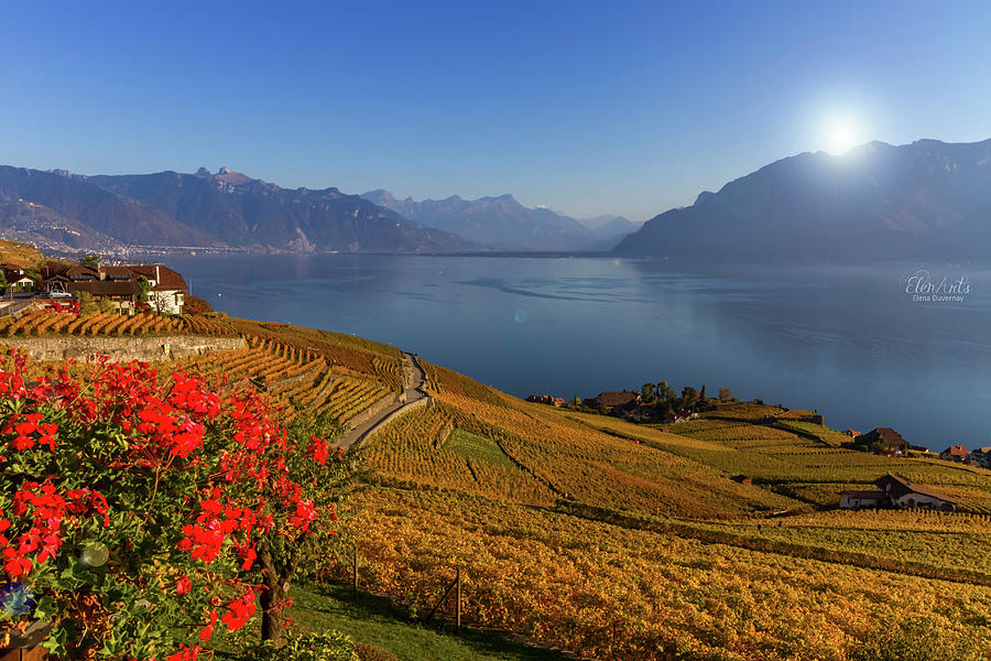Lavaux region, Vaud, Switzerland by Elenarts - Elena Duvernay photo